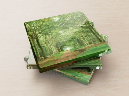 Beech Avenue - Glass Coasters